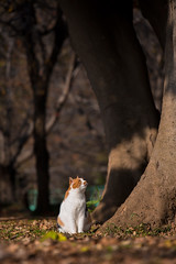 5032016/11/26 (Natsuki_y) Tags: cats cat straycat tokyo canon 5d 70200mm autum