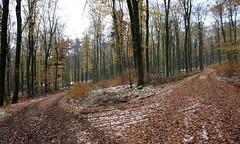 03-IMG_7027 (hemingwayfoto) Tags: buchenwald freizeit herbst herbstlaub kurve mittelgebirge november panther schnee taunus wald wanderung weg