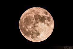 Pleine-Lune du 14.11.2016 (Dany-de-Nice) Tags: lune moon nuit night 6d 600mm