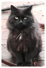 Tufftys Winter Coat (KeithJustKeith) Tags: tuffty winter coat salford keithjustkeith keithjustkeith2016 2016 greatermanchester manchester black cat canon eos 100d 70mm300m temiron animal pet