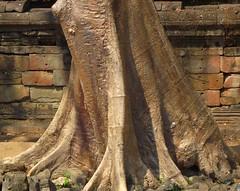 ANGKOR TREES (patrick555666751) Tags: angkor trees tree arbres arbre arboles cambodia cambodge asie du sud est south east asia kampuchea flickr heart group angkortrees cambodja camboja cambogia camboya kambodscha