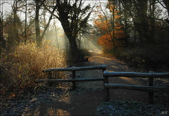 This morning was magical (Hetty S.) Tags: magical trees sun rays park light fence winter holland path zonneharpen licht hs hetty hettys