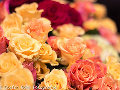 Bed of roses (Stefan Bhm Fotografie) Tags: roses love rosen amore