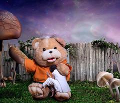 Necesitar (Agustina Santervs) Tags: teddy agustina mimos necesitar