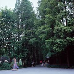 Arboles (Hagen123) Tags: parque color tree 120 6x6 film zeiss arbol fuji arboles hasselblad velvia f carl rbol 28 f28  planar 500cm  silverfast 80cm cf80