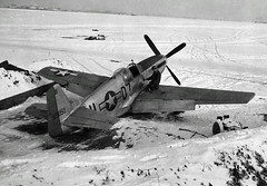 Mustang in the snow