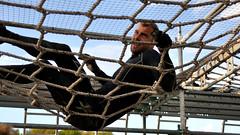 Toughest Gothenburg 2015 (Arndted) Tags: göteborg nikon sweden gothenburg sverige tamron obstacle obstaclecourse ocr d90 toughest tamronspaf1750mmf28xrdiiildasphericalif toughestrace toughestgothenburg2015 toughestgothenburg