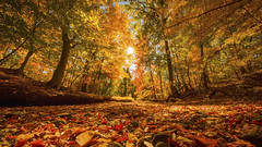 The Magic of Autumn (gimmeocean) Tags: autumn fall newjersey fallcolor nj autumnleaves fallfoliage flare sunburst burst winfield autumnal autumncolor