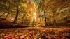 The Magic of Autumn (gimmeocean) Tags: autumn fall newjersey fallcolor nj autumnleaves fallfoliage flare sunburst burst winfield autumnal autumncolor