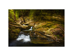 Remmata Brook #1, Andros island (Christos Andronis) Tags: trees water mystery creek forest rocks stream brook