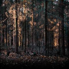 Au Bois d'Or (Clydomatic) Tags: lumière arbres forêt branchage