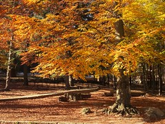 Autumn (David Cucalón) Tags: park parque autumn tree colors landscape arbol colours paisaje colores otoño arbre x20 tardor montseny 2015 cucalon davidcucalon