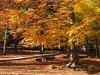 Autumn (David Cucalón) Tags: park parque autumn tree colors landscape arbol colours paisaje colores otoño arbre x20 tardor montseny 2015 cucalon davidcucalon