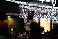 Sinterklaas intocht, The Hague (Luke Hermans) Tags: sinterklaas saint nicolas sint nicolaas den haag hague intocht arrival netherlands grote marktstraat bijenkorf de