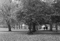(frscspd) Tags: 39170003 20160903 pentax pentaxmx mx takumar takumar58mm 58mm ilford ilfordxp2400bw ilfordxp2 xp2 film filmgrain blackandwhite cambridge christspiece autumn leaves tree trees earlymorning
