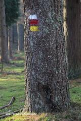 OTZARRETA (Angel Ezkurra photography) Tags: autumn trees naturaleza paisaje árbol otoño alava niebla gorbea arava udazkena euskoflickr zeanuri eguraldia barazar otzarreta eitbcom udaskena