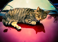 Poes op warme motorkap (MJ Klaver) Tags: street reflection car cat kat hood texel warmte denburg s120 canonpowershots120 powershots120