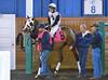 "2015-11-11 (55) r6 Larry Mejias on #8 Janealee (JLeeFleenor) Tags: photos photography md marylandracing marylandhorseracing laurelpark bay jockey جُوكِي ""赛马骑师"" jinete ""競馬騎手"" dżokej jocheu คนขี่ม้าแข่ง jóquei žokej kilparatsastaja rennreiter fantino ""경마 기수"" жокей jokey người horses thoroughbreds equine equestrian cheval cavalo cavallo cavall caballo pferd paard perd hevonen hest hestur cal kon konj beygir capall ceffyl cuddy yarraman faras alogo soos kuda uma pfeerd koin حصان кон 马 häst άλογο סוס घोड़ा 馬 koń лошадь paddock maryland"