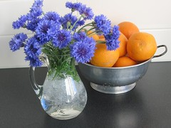 still life with oranges (Kalmagic !) Tags: blue orange kitchen oranges colander cornflowers