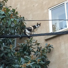 #cat #gato #chat #kitty #kitten #minino #funambulista #equilibrio #circus #animal #friday #viernes #vendredi #gatto #gattonero (itcomext) Tags: animal cat kitten chat circus kitty gato friday gatto vendredi equilibrio viernes minino gattonero funambulista instagram ifttt httpsinstagramcomplnjpno4