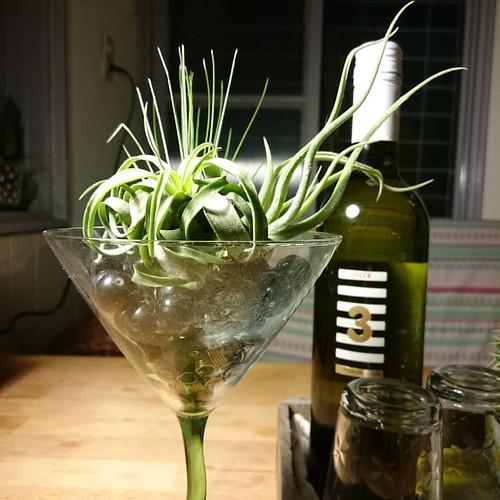 深夜賞玩植物真療癒。來杯空氣鳳梨馬丁尼~airplanes martini