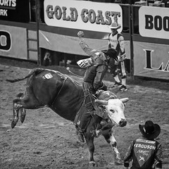 02468723-71-NFR 2015 Bull Riding Cowboy-2-black and white (Jim There's things half in shadow and in light) Tags: blackandwhite southwest sports america cowboy fighter lasvegas clown bull rodeo bullriding 2015 nfr nationalfinals thomasandmack