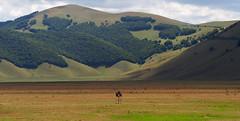 Lone donkey (Hans & Liek) Tags: park italy nationalpark ezel plateau donkey hills umbria itali castelluccio heuvels sibillini pianogrande vlakte nationaal umbri greatplain montisibillininationalpark montesibillini