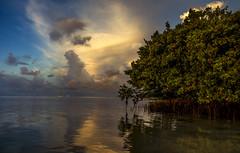 Anne's Beach - Islamorada, Florida Keys (dubrick321) Tags: floridakeys landscape beach beachesinflorida beachesinfloridakeys sunrise islamorada floridalandscape mangrove floridamangrove nikon annes