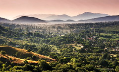 Tuscolo (iltexano) Tags: tuscolo castelli romani parco olympus em5 omd panasonic m43 microfourthirds landscape italy