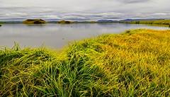 _DSC1051_ (andoni.guridi) Tags: myvatn lago lake iceland islandia summer verano uda agosto august paisaje landscape