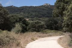 Cork oak path (ramosblancor) Tags: naturaleza nature paisaje landscape montemediterrneo mediterraneanforest camino path corkoak alcornoque quercussuber estrechodegibraltar straitofgibraltar cdiz espaa spain