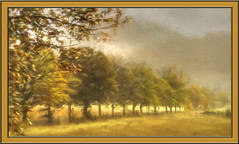 Tree Row (williamwalton001) Tags: fineart framed trees texture colourimage clouds landscapephoto scotland sky borders daarklands