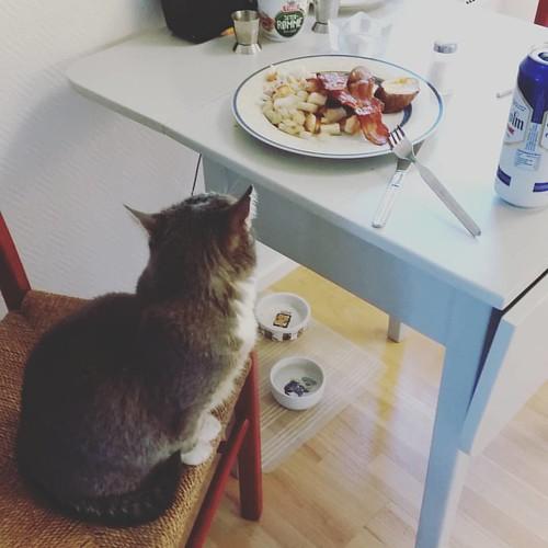 Katta og eg er litt usamde om kven som skal sitje på den stolen.