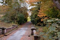 towards the house (Harry McGregor) Tags: outdoor tree plant bridge autumn auchinleckhouse eastayrshire nikon d3300 harrymcgregor 24 october 2016 woodland farmland boswell boswellfamily