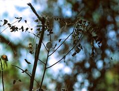Snail (analoguefilm) Tags: bronica etrsi zenzanon filmphotography analog kodak portra160vc expiredfilm nature snail canoscan8800f