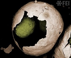 Aliens nest (FEI Company) Tags: fei microscopy nanotechnology nanoimage magnification feiimagecontest inspect mineralsandmining mining