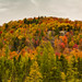 Bright Fall Colors - Hills of Onchiota - Autumn in Vermontville, Upstate New York