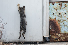 JUMP (Welcome to follow) Tags: cats cat catmoments canon