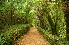 Your journey begins here (Pedro Nuno Caetano) Tags: portugal braga mosteirodesmartinhodetibes monastery