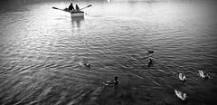 Paseando por el lago (Isabel Aguado Rodrguez) Tags: sonydschx300 agua estanque estany banyoles girona barca patos anecs bw naturaleza