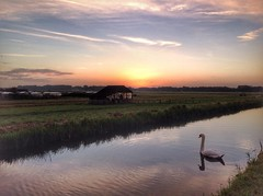 The early bird gets the worm (sander_sloots) Tags: polder rotterdam zwaan swan bird vogel sloot canal sunrise zonsopkomst dusk dawn landschap landscape
