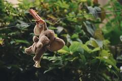 Follow your heart (anne_dean07) Tags: mood tumblrmood elephantsear minielephant cutestuffedanimal nikond5500 vsco underexposed hanging elephant cute stuffedelephant stuffedtoy stuffedanimal