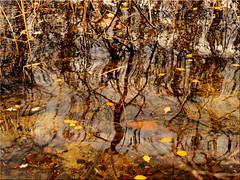 Autumnal reflections on the Lake (Ostseetroll) Tags: badsegeberg deu deutschland geo:lat=5394764945 geo:lon=1031858340 geotagged schleswigholstein segebergersee wasser lake spiegelungen reflections herbst autumn