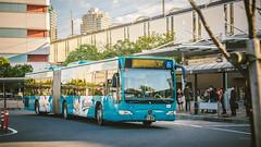 MERCEDES-BENZ O530G_Narashino230A4822_2 (hans-johnson) Tags: blue keisei keiseibus keiseigroup narashino chiba makuhari hongo makuharihongo makuharishintoshin shintoshin bus terminal busterminal transit transport transportation                 japan asia kanto kantochiho     benz mercedes mercedesbenz citaro evobus evo daimler mb o530 o530g citarog     g    canon eos 5diii 5d 5d3 eos5d 70200 day