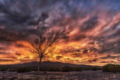 Winter Sunset (inlightful) Tags: sunset evening dusk sunrise morning dawn pink orange yellow blue tree baretree outdoors nature winter southwest rural dirt mountain sky weather newmexico socorrocounty