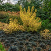 Savill Gardens 015 Autumnal colour