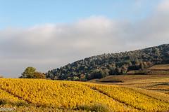 EN TOURNANT LE DOS À LA ROCHE (cirodde71) Tags: solutré en automne