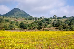 Looming over the Niger field (ashok kolluru) Tags: araku andhrapradesh visakhapatnam vizag
