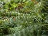 Autumn Colours (Triker-Sticks) Tags: trees nature leaves autumn thelodge rspb reserve england