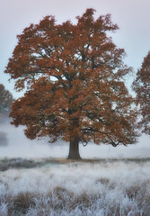 Pre Sunrise Tree in Frost (paulinuk99999 - tripods are for wimps :)) Tags: paulinuk99999 tree nature landscape frost winter november 2016 sal70400g